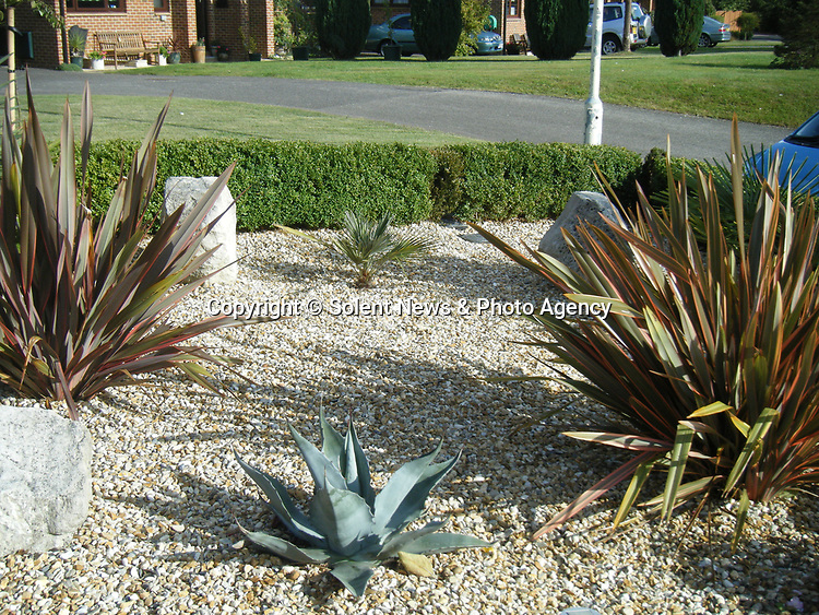 Pictured:  The agave plant (front centre) in Julie and Rob Crook's front garden in 2009 - 11 years ago.<br /> <br /> An exotic 'tequila plant' has suddenly rocketed to 25ft in height after mysteriously sprouting in a couple's front garden after two decades lying dormant.  The giant agave's stalk unexpectedly began shooting up 12 weeks ago and now towers over owners Rob and Julie Crook's two-storey home in a little cul-de-sac.<br /> <br /> The grandparents-of-two have been left stunned by the plant's 'Jack and the Beanstalk' type growth after planting it in 2005.  Mrs Crook was gifted a six-inch pup - an offspring of the parent plant - by a friend 20 years ago after her fascination with the asparagus-like shrub.<br /> <br /> But the 59-year-old said she never expected the agave to grow to such heights at the front of the couple's home in the small Hampshire village of Charlton.  SEE OUR COPY FOR DETAILS.<br /> <br /> © Solent News & Photo Agency<br /> UK +44 (0) 2380 458800