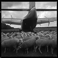 20 mai 1965. Vue d'un attérissage d'un Bréguet en forêt de Boucconne à proximité d'un troupeau de moutons.