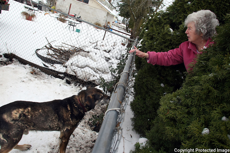 C.H. Lindberg checks on her neighbor's dog several times a day which is tied up continuously in Enumclaw, Wash. on December 23,2008.  She and her neighbors have called, faxed, and sent letters to King County Animal Control but have gotten little response.  They also called their local police department and health department. Lindberg and her neighbors are frustrated because no one will do anything to help the dog.  (Karen Ducey/Seattle Post-Intelligencer)