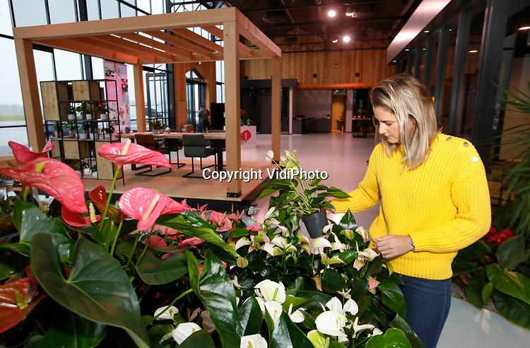 Foto: VidiPhoto<br /> <br /> BEMMEL – Het Karma Centre, de 200 vierkante meter ultramoderne en duurzame ontvangstruimte met tropische uitstraling, van Karma Plants in Bemmel is gereed. Daarmee is de nieuwbouw, een uitbreiding van 3 ha., afgerond. Het bedrijf van de familie Langelaan is met alle doorgevoerde vernieuwingen voor nu 95 procent energieneutraal en heeft het de meest duurzame anthuriumkwekerij van Nederland. Zo is er door het aanbrengen van sandwichpanelen en schermdoeken geen sprake meer van lichtvervuiling. Op twee locaties in kassengebied Next Garden bij Bemmel worden nu op een kleine 9 ha veertien verschillende anthuriums gekweekt. Naar deze hartvormige plant is op dit moment veel vraag.