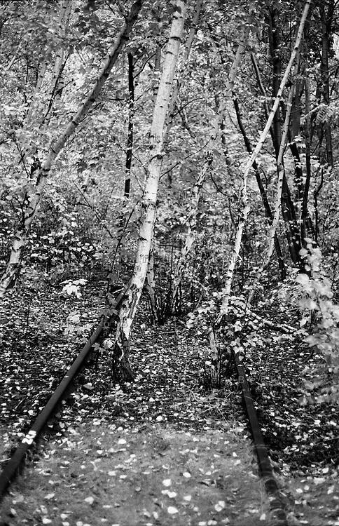 """Berlino, quartiere Kreuzberg. Vecchi binari in disuso di una linea ferroviaria abbandonata, immersi nella vegetazione del parco am Gleisdreieck (""""triangolo delle rotaie"""") --- Berlin, Kreuzberg district. Old disused track of an abandoned railway line covered by vegetation at the Park am Gleisdreieck (""""rails triangle"""")"""