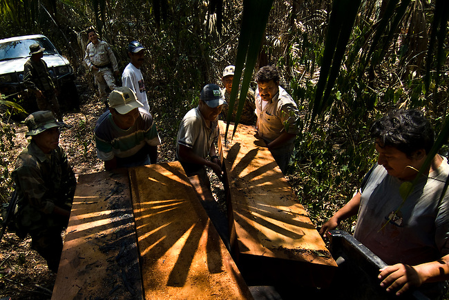 """Guatemala, Petén, Mayan Biosphere Reserve, Land Conflicts, CONAP the  administrator of the Mayan Biosphere Reverve, DIPRONA and the Military confiscate illigal logged mahagoni trees in """"Laguna del Tiegre"""", protected area inside the Mayan Biosphere. The loggers have disapeared once they noticed the patrol."""