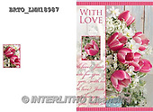 Alfredo, FLOWERS, BLUMEN, FLORES,  photos+++++,BRTOLMN18987,#F#