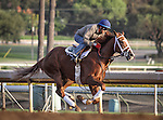 October 27, 2014: Take Charge Brandi works in preparation for the Breeders' Cup Juvenile Fillies at Santa Anita Park in Arcadia, California on October 27, 2014. Zoe Metz/ESW/CSM