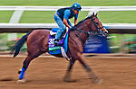 DEL MAR, CA - OCTOBER 28: Oscar Performance, owned by Amerman Racing, LLC and trained by Brian A. Lynch, exercises in preparation for Longines Breeders' Cup Turf at Del Mar Thoroughbred Club on October 28, 2017 in Del Mar, California. (Photo by Alex Evers/Eclipse Sportswire/Breeders Cup)