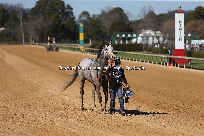 March 6, 2021: Niall after winning the fourth race at Oaklawn Racing Casino Resort in Hot Springs, Arkansas on March 6, 2021. Justin Manning/Eclipse Sportswire/CSM