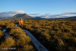 The Overland Track in Tasmania, one of the best trek in the world
