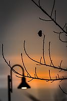 On a winter evening, a lone leaf clings to otherwise bare branches against a background of setting sun and lamp post.