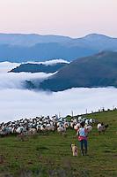 Europe/France/Aquitaine/64/Pyrénées-Atlantiques/Pays-Basque/Aussurucq: Jean-Paul Erdozainy Etchart , berger, rassemble son troupeau de brebis en estive dans les paturages d'Ahusquy [Autorisation : 2011-127] [Autorisation : 2011-128]