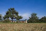 Europa, DEU, Deutschland, Baden Wuerttemberg, Schwaebische Alb, Hechingen-Boll, Spaetsommer, Kirche, Baum, Obstbaum, Apfelbaum, Streuobstwiese, Kategorien und Themen, Architektur, Architektonisch, Architekturstil, Bauwerk, Gebaeude, Historisch, Architekturfoto, Architekturphoto, Architekturfotografie, Architekturphotographie, Natur, Naturfoto, Naturfotos, Naturfotografie, Naturphoto, Naturphotographie, Landschaft, Landschaften, Landschaftsfoto, Landschaftsfotografie, Landschaftsphoto, Landschaftsphotographie....[Fuer die Nutzung gelten die jeweils gueltigen Allgemeinen Liefer-und Geschaeftsbedingungen. Nutzung nur gegen Verwendungsmeldung und Nachweis. Download der AGB unter http://www.image-box.com oder werden auf Anfrage zugesendet. Freigabe ist vorher erforderlich. Jede Nutzung des Fotos ist honorarpflichtig gemaess derzeit gueltiger MFM Liste - Kontakt, Uwe Schmid-Fotografie, Duisburg, Tel. (+49).2065.677997, ..archiv@image-box.com, www.image-box.com]