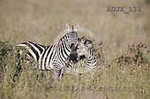 Dr. Xiong, ANIMALS, wildlife, photos, AUJX138,#a#