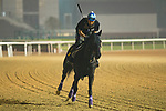 DUBAI,UNITED ARAB EMIRATES-MARCH 30: Vivlos,trained by Yasuo Tomomich,exercises in preparation for the Dubai Turf at Meydan Racecourse on March 30,2018 in Dubai,United Arab Emirates (Photo by Kaz Ishida/Eclipse Sportswire/Getty Images)