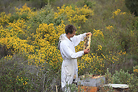 A beekeeper inspects his hives in a landscape of scrub land.///Un apiculteur inspecte ses ruches dans un paysage de garrigue. Stephane Levrero