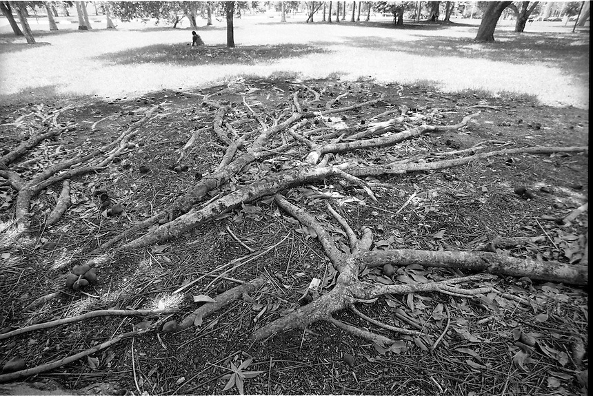 """Roots<br /> From """"Walking Downtown"""" series<br /> Miami, 2010"""