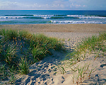 Cape Hatteras National Seashore, NC:  Beach path leads over the barrier dunes to the sand beach and ocean waters of Ocracoke Island