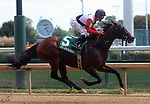September 06, 2014:   Bradester win the 22nd running of the G3 Ack Ack Handicap at Churchill Downs (Louisville, KY), ridden by Corey Lanerie.  He is a bay colt, 4 years old, trained by Eddie Kenneally and owned by Joseph B. Sulton.  Lion Heart x Grandestofall (Grand Slam) ©Mary M. Meek/ESW/CSM