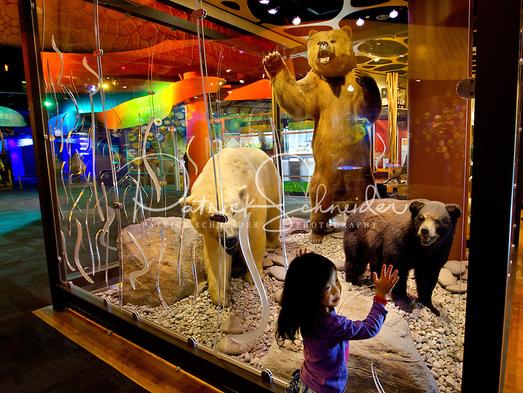 Charlotte, NC on-location photography of Discovery Place, Charlotte's hands-on science museum located in downtown Charlotte NC. In this image, a young girl examines a display of bears.