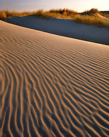 Sand dunes in Oregon Dunes National Recreation Area in Lane County Oregon