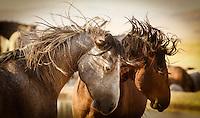Agree to disagree - Wild Horses - Utah