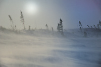 WAPUSK NATIONAL PARK, MANITOBA<br /> Heftige Stürme bei minus 52° C<br /> Minus 52 °C  coupled with heavy storms<br /> <br /> Full size: 69,1 MB