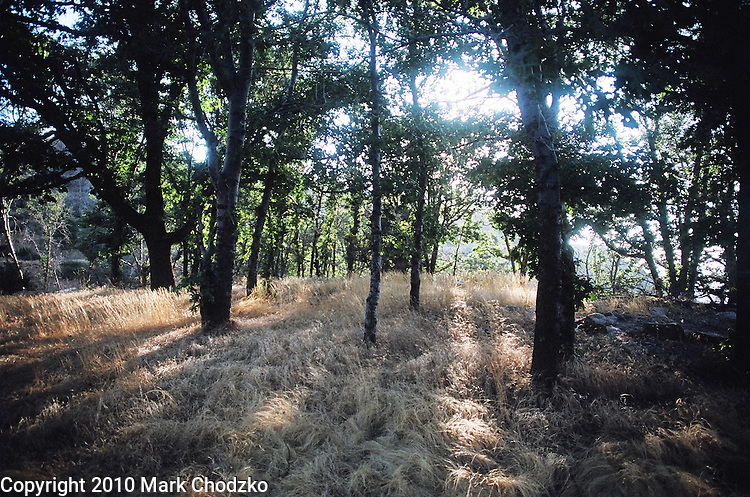 Early morning sun filters through the trees in the San Bernardino Mountains.
