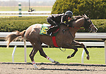 07 April 2011.  Hip #159 DISPUTANTA  Lawyer Ron - I Don't KNow filly, consigned by Eddie Woods.