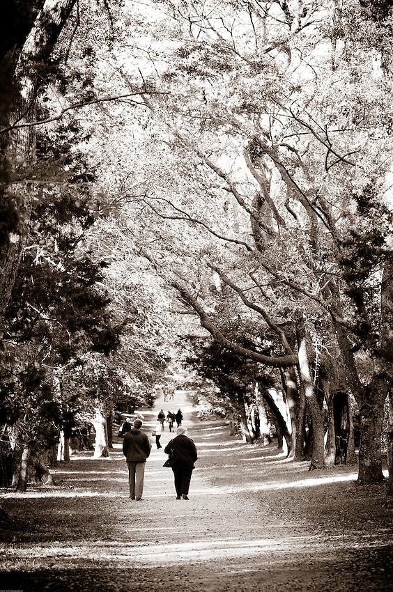 Families walk under the canopy of oaks at Berkeley Plantation