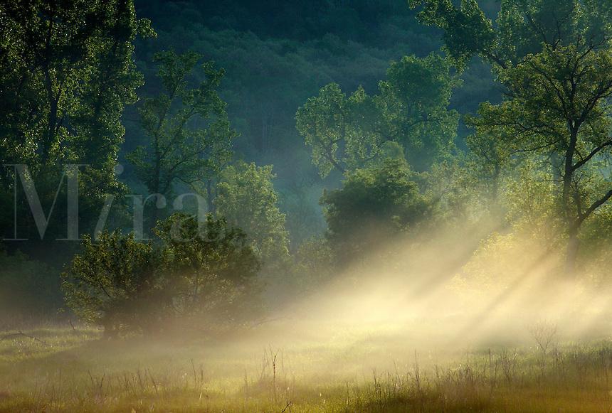 Sun shining through fog, Whitewater Wildlife Management Area, Minnesota