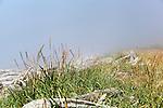 Ebey's Landing Beach in Fog.  Ebey's Landing National Historic Preserve, Whidbey Island, Washington