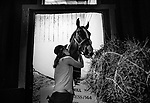 MAY 18: Sam Bussanich hugs War of Will at the barn after winning  the Preakness Stakes at Pimlico Racecourse in Baltimore, Maryland on May 18, 2019. Evers/Eclipse Sportswire/CSM