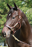 11 September 2011.  Hip #153 Street Sense - Cappucino Bay filly consigned by Taylor Made Sales.