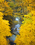 Matthiessen State Park, IL<br /> Fall colored forest canopy over stream in the Upper Dells Area
