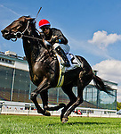 September 19, 2015 :  Mr Speaker, ridden by Jose Ortiz, wins the Grade 2 Commonwealth Cup Stakes clear by a length on Commonwealth Graded Stakes Day at Laurel Park in Laurel, MD. Scott Serio/ESW/CSM