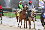 February 27, 2021: #4 Casual, in the post parade for the Spring Fever Stakes at Oaklawn Park in Hot Springs, Arkansas. Ted McClenning/Eclipse Sportswire/CSM