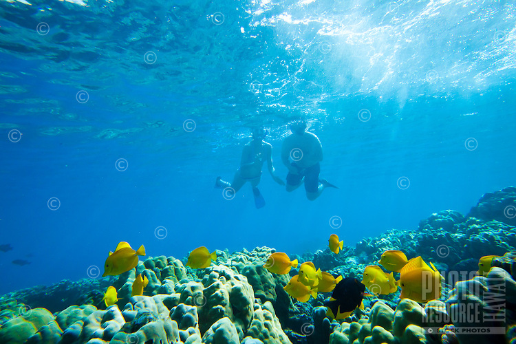 A couple snorkeling along the reef at Kealakekua Bay, Big Island