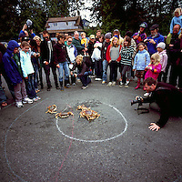 Tofino, Vancouver Island, BC, British Columbia, Canada - Spectators watching Crab Race at Crab Festival