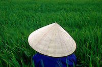 Images from the Book Journey Through Colour and Time, Vietnam Rice Farmer in the Mekong Delta