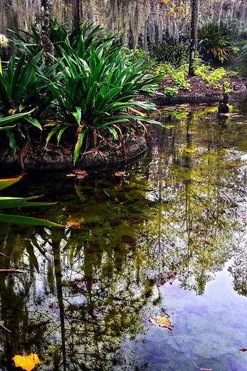 Fall reflections of Florida