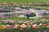 Luiz, FLOWERS, photos, BRLH8778,#f# Blumen, Natur, flores, naturaleza
