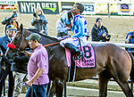 Oct 05, 2019 :  Neptune's Storm with Ricardo Santana, wins the $400,000 Hill Prince Stakes, 1 1/8 mile on turf, at Belmont Park, in Elmont, NY, October 05, 2019. Sue Kawczynski_ESW_CSM,