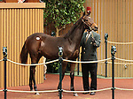 Hip 219 Hard Spun - Inny River colt consigned by Paramount Sales, sold for $200,000.   November 7,2012.