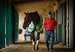DEL MAR, CA - OCTOBER 29:  Assistant trainer Riley Mott walks Breeders' Cup Distaff contender Elate after her workout at Del Mar Thoroughbred Club on October 29, 2017 in Del Mar, California. (Photo by Alex Evers/Eclipse Sportswire/Breeders Cup)