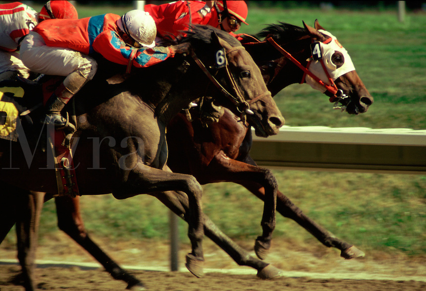 #590.Arabian races horses, neck and neck, drive for finish..