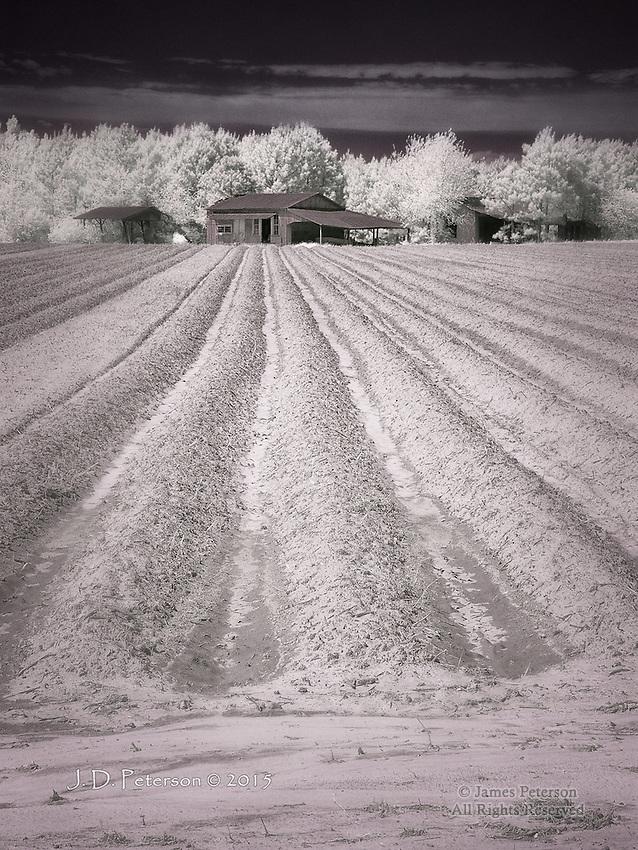Hard Living - Farmstead near Warsaw, NC (Infrared)