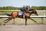 #69Fasig-Tipton Florida Sale,Under Tack Show. Palm Meadows Florida 03-23-2012 Arron Haggart/Eclipse Sportswire.