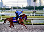 January 20, 2021: Math Wizard exercises as horses prepare for the 2021 Pegasus World Cup Invitational at Gulfstream Park in Hallandale Beach, Florida. Scott Serio/Eclipse Sportswire/CSM
