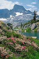 White and red mountain heather<br />Banner Peak and Mt. Ritter<br />Ansel Adams Wilderness, Toiyabe National Forest<br />Sierra Nevada, California
