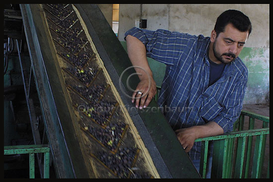 A Palestinian worker is seen in an olive pres in the Palestinian village of  Jmmain in the West Bank, November 2, Palestinians of  Jmmain have found many difficulties with Jewish settlers and Israeli army when they tried to harvest their trees. Photo by Quique Kierszenbaum