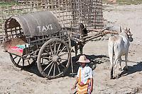 Myanmar, Burma.  Mingun, near Mandalay.  Ox-drawn Taxi awaits Visitors at the Riverbank.