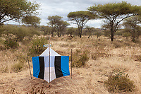 Tanzania. Tarangire National Park.  Tsetse Fly Traps.  Flies are attracted by blue color.